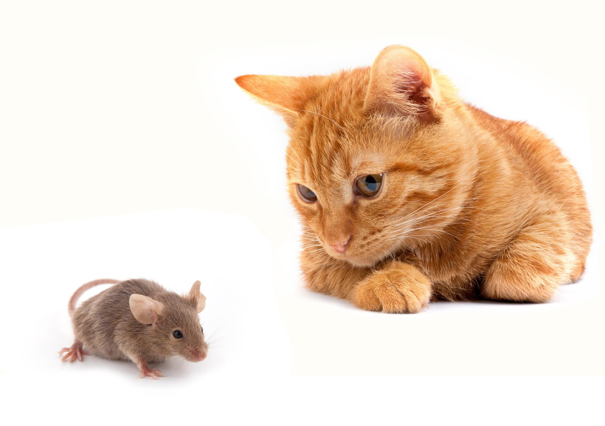 ネズミの画像 p1_19